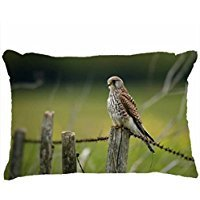 custom-pillowcases-home-decor-design-animal-falcon-animal-diy-pillow-cases-cover-throw-size-personal