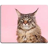 luxlady-raton-para-gaming-imagen-id-24860360-retrato-pedigree-maine-coon-cat-en-pastel-color-rosa