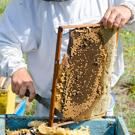 Fresh and healthy bee products packed with nutrients