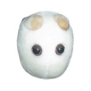 Amazon Com Giantmicrobes Beer And Bread Saccharomyces