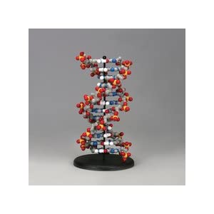 Amazon.com: The DNA Discovery Kit: Industrial & Scientific