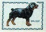 Rottweiler Cross Stitch Kit