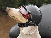 Doggie Bike or Motorcycle Helmet ~ Small Black by Zoomer Gear