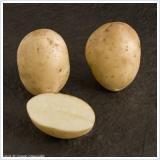 Sycamore Trading Seed Potatoes NAVAN x 20 Tubers