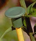 Elixir Large Rubber Cane Caps, Bamboo Canes, Stakes 25,50,100,125,200,250