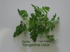 Petite Tangerine Lace Tm - 4 x 8 oz