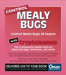 Beneficial Cryptolaemus 25 Count Mealy Bug Organic Pest Control
