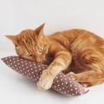 またたびけりけり【ロング】ドット  nekozuki 猫用おもちゃ 全年齢の猫用 (スモールドット・ブルー871)