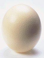 Ostrich Egg Shell