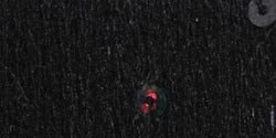 Bernat Sequin Yarn - Black Diamond