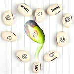 10-Pack Romantic White Wishing Magic Beans Seeds Plant Growing Assorted Messages Words
