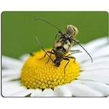 msd-tappetino-per-mouse-in-gomma-naturale-gioco-foto-id-7199381-copulating-longhorn-coleotteri-margh