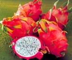 Hylocereus undanus Dragon fruit-50 Seeds