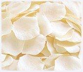 Ivory Silk Rose Petals - Bag of 200 petals