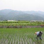福岡県産 筑後の安心米 玄米 ヒノヒカリ 2kg (25年間 無農薬 無化学肥料 農家直送 ) 平成26年産