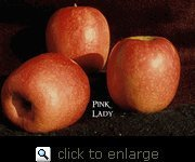 Pink Lady Apple Tree Five Gallon