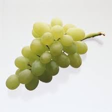 1 Plant of Blanc Du Bois Grape Vine Shrub, (1 Gallon, Bare-root), White Grapes, Makes a Spicy-fruity Flavored White Wine (Bare Root Grapes compare prices)