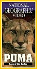 National Geo.: Puma: Lion of T