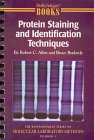 img - for Protein Staining and Identification Techniques (Biotechniques Molecular Laboratory Methods) book / textbook / text book