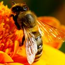 Bee pollen, propolis, and royal jelly have been used for thousands of years
