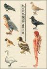 私家版鳥類図譜 (KCデラックス モーニング)