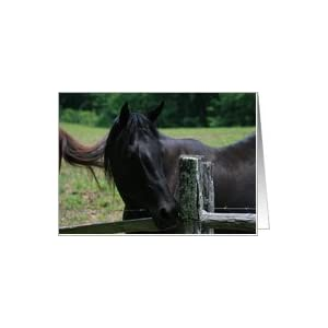 Horse Fence Options - Pasture Fencing for Horses