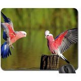 Parrots in love Mouse Pad, Mousepad (Birds Mouse Pad)