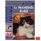 Le  Scottish fold
