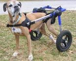 Dog Wheelchair Made By Walkin' Wheels - Large
