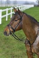 USG - Trense Marvellous, schwarz, Pony, engl.