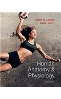 Human Antaomy & Physiology 9th Ed. Marieb Hoehn (Human Anatomy & Physiology 9th Edition)