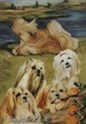 Best Friends Playing Cards, by Ruth Maystead - Lhasa Apso (Lhasa Apso spelled correctly) - 1