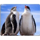 msd-natural-rubber-gaming-mousepad-image-id-8479736-two-penguins-in-antarctica