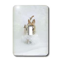 Kike Calvo Animals - Canadian Eskimo Dog Hudson Bay Churchill Northern Canada - Light Switch Covers - single toggle switch