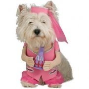 I Dream Of Jeannie Pet Costume
