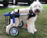 Dog Wheelchair Made By Walkin