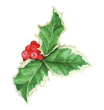 Philips 12ct Red Led Holly Berry Cluster Mini String Lights Amazon Com