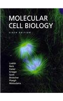 Molecular Cell Biology Sixth Edition