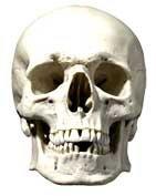 Skull Halloween Face Mask by Star Masks