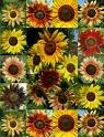 Sunflower Seed Mix-1 Oz from The Dirty Gardener