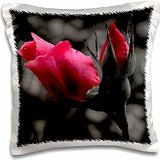 - Roses and Smoke Clouds - 16x16 inch Pillow Case