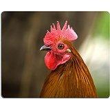 red-rooster-luxlady-mousepads-cosce-piume-nature-dimmagine-rurale-23083375-art-personalizzato-portat