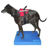 FitPAWS Balance Pad for Dogs
