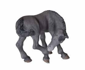 Black Lusitanian Foal