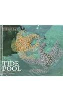 Tide Pool (Webs of Life)