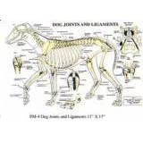 Canine Joints & Ligaments, Laminated Chart