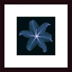 Lily, framed black wood, white matte
