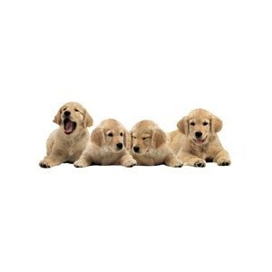 "Paper House Jigsaw Shaped Puzzle 500 Pieces 30.5""X10.5"" Golden Retriever Puppies"