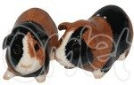 Salt & Pepper Guinea Pigs