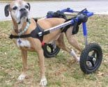 Dog Wheelchair - Med/Large - Made By Walkin' Wheels